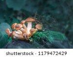 magic mushroom stock images.... | Shutterstock . vector #1179472429