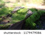 The Log Covered With Moss Is...