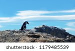 sad african penguin is staying... | Shutterstock . vector #1179485539