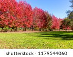 tree lined driveway during fall ... | Shutterstock . vector #1179544060