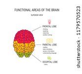 functional areas of the brain ... | Shutterstock .eps vector #1179570523