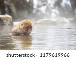 some macaque apes take a bath... | Shutterstock . vector #1179619966