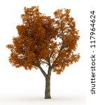 3d American Buckeye Tree In...