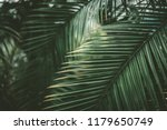 Green Palm Leaf Pattern Textur...