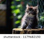 close up a playful black ticked ... | Shutterstock . vector #1179682150