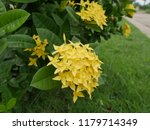 spike flowers or red flowers in ... | Shutterstock . vector #1179714349