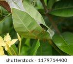 spike flowers or red flowers in ... | Shutterstock . vector #1179714400