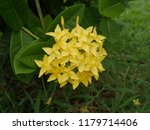 spike flowers or red flowers in ... | Shutterstock . vector #1179714406