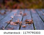 oak leaf on the porch | Shutterstock . vector #1179790303