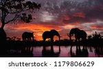 Elephants At Sunset. Elephants...