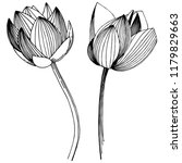 lotus flower in a vector style... | Shutterstock .eps vector #1179829663
