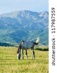 lonely horse at the meadow | Shutterstock . vector #117987559
