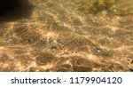 seabed  underwater photography  | Shutterstock . vector #1179904120