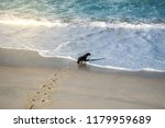 baby seal pup on a beautiful... | Shutterstock . vector #1179959689