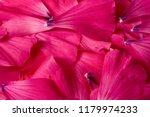 texture background. pattern.... | Shutterstock . vector #1179974233