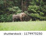 majestic european bison  bison... | Shutterstock . vector #1179975250