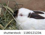rabbit. oryctolagus. white... | Shutterstock . vector #1180121236