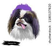 japanese chin  japanese spaniel ...   Shutterstock . vector #1180137820