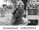 Stock photo a rodeo barrel racing horse and contestant explode the arena sand as they gallop fast into a turn 1180155013