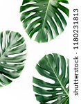 tropical palm leaves monstera... | Shutterstock . vector #1180231813