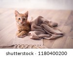 young cat adorable resting on... | Shutterstock . vector #1180400200
