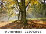 beautiful autumn park | Shutterstock . vector #118043998