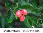 mango lime booze | Shutterstock . vector #1180446436