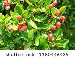 mango lime booze | Shutterstock . vector #1180446439