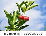 mango lime booze | Shutterstock . vector #1180603873