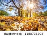 bright foliage in sunny autumn... | Shutterstock . vector #1180738303