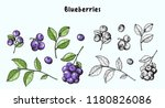 blueberries. vector... | Shutterstock .eps vector #1180826086