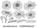 decorative chamomile flowers... | Shutterstock .eps vector #1180836610