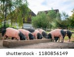 countryside scene with german... | Shutterstock . vector #1180856149
