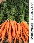 bright carrots in the market | Shutterstock . vector #1180879570