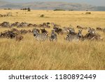 Zebras and gnus on a common...