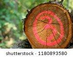 felled tree number three | Shutterstock . vector #1180893580