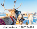close up of reindeer pulling a... | Shutterstock . vector #1180974109