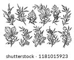 hand sketched vector autumn set ... | Shutterstock .eps vector #1181015923