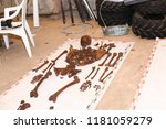 archaeological finding of the... | Shutterstock . vector #1181059279