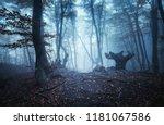 Mystical Dark Autumn Forest...