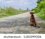 A Rear Of Lonely Stray Dog  Si...