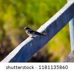 a dainty delightful  little... | Shutterstock . vector #1181135860