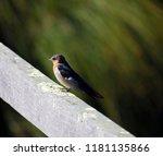 a dainty delightful  little... | Shutterstock . vector #1181135866