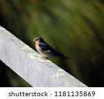 a dainty delightful  little... | Shutterstock . vector #1181135869
