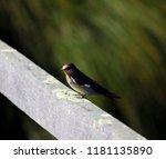 a dainty delightful  little... | Shutterstock . vector #1181135890