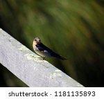 a dainty delightful  little... | Shutterstock . vector #1181135893