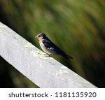 a dainty delightful  little... | Shutterstock . vector #1181135920