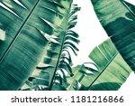tropical banana palm leaf... | Shutterstock . vector #1181216866