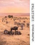 landscape of ngorongoro crater  ... | Shutterstock . vector #1181237563
