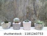 Pot Cactus Background